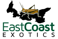East Coast Exotics